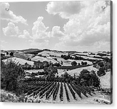 Hills Of Tuscany Acrylic Print by Clint Brewer
