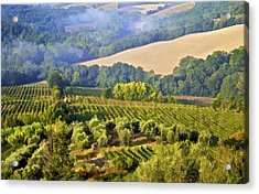 Hills Of Tuscany Acrylic Print by David Letts