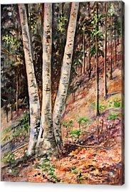 Hillside Birch Acrylic Print by Kristine Plum