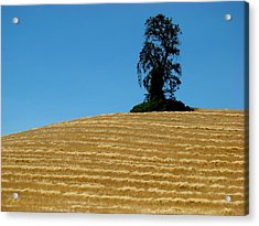 Acrylic Print featuring the photograph Hillside Protector by Paul Foutz