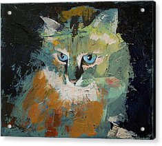 Himalayan Cat Acrylic Print by Michael Creese