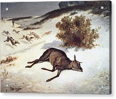 Hind Forced Down In The Snow Acrylic Print by Gustave Courbet
