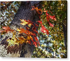 Hints Of Fall Acrylic Print