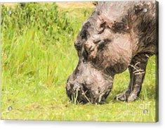 Hippo Hippopotamus Amphibius Grazing Acrylic Print by Liz Leyden