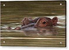 Hippo Painting Acrylic Print