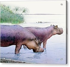 Hippopotamus Gorgops Acrylic Print