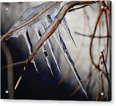 His Biting Touch Acrylic Print