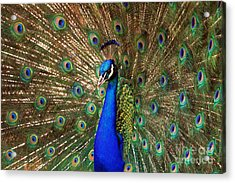 Acrylic Print featuring the photograph His Majesty by Geraldine DeBoer