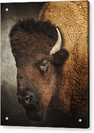 His Majesty Acrylic Print by Ron  McGinnis