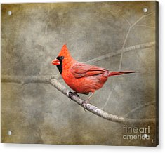 His Red Glory Acrylic Print by Jai Johnson