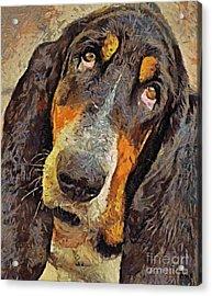 His Soft Sad Look Acrylic Print