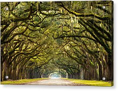 Historic Wormsloe Plantation Oak Trees Acrylic Print by Serge Skiba