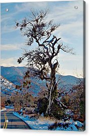 Hitchhiker On Highway 173 Acrylic Print by Glenn McCarthy Art and Photography