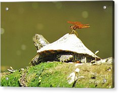 Hitching A Ride Acrylic Print