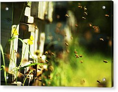 Hives And Bees Acrylic Print