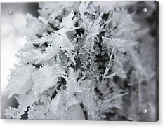 Hoar Frost In November Acrylic Print by Ryan Crouse