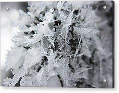 Hoar Frost In November Acrylic Print
