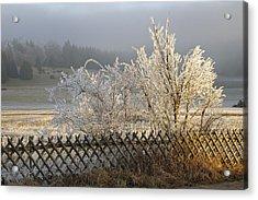 Hoarfrost In Winter Acrylic Print by Matthias Hauser