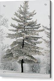 Hoarfrost Pine Tree Acrylic Print