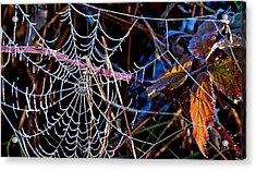 Acrylic Print featuring the photograph Hoary Web by Julia Hassett
