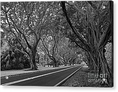 Hobe Sound Bridge Rd. West II Acrylic Print by Larry Nieland