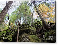 Hocking Hills Moss Covered Cliff Acrylic Print by Karen Adams