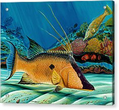 Acrylic Print featuring the painting Hog And Filefish by Steve Ozment