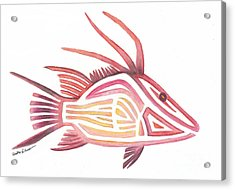 Hogfish Acrylic Print