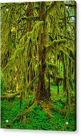 Hoh Rainforest Heavy Weight Acrylic Print