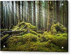 Hoh Rainforest Log Jam Acrylic Print