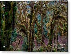 Hoh Rainforest, Olympic National Park Acrylic Print by Mark Newman