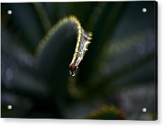 Acrylic Print featuring the photograph Hold On by Nadalyn Larsen