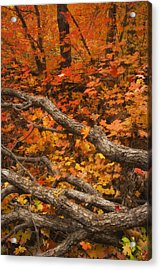 Holding Back Acrylic Print by Peter Coskun