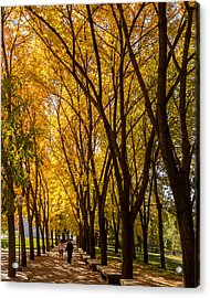 Acrylic Print featuring the photograph Holding Hands Under Tree Canopy by David Coblitz