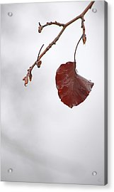 Holding On Acrylic Print by Karol Livote