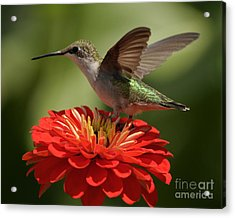 Acrylic Print featuring the photograph Holding On by Olivia Hardwicke