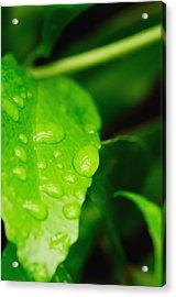 Holding Raindrops Acrylic Print