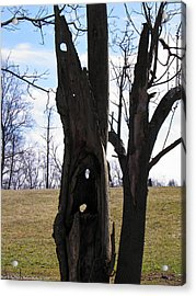 Acrylic Print featuring the photograph Holey Tree Trunk by Nick Kirby