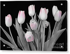 Acrylic Print featuring the photograph Holland Tulips In Black And White With Pink by Jeannie Rhode