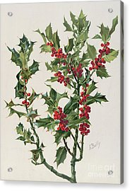 Holly Acrylic Print by Alice Bailly