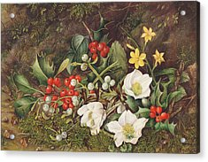 Holly And Christmas Roses Acrylic Print by Jane Taylor