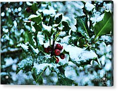 Acrylic Print featuring the photograph Holly And New Snow by Mindy Bench