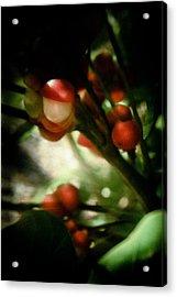 Holly From The Dark  Acrylic Print