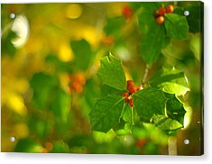 Acrylic Print featuring the photograph Holly In The Wood by Suzanne Powers