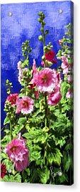 Hollyhock Haven Acrylic Print