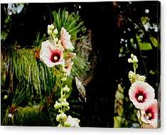 Hollyhock Heaven Acrylic Print