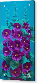 Hollyhocks Acrylic Print