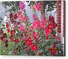 Hollyhocks Mix Acrylic Print