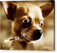 Hollywood Fifi Chika Chihuahua - Electric Art Acrylic Print by Wingsdomain Art and Photography
