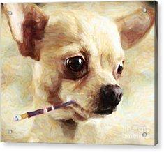 Hollywood Fifi Chika Chihuahua - Painterly Acrylic Print by Wingsdomain Art and Photography